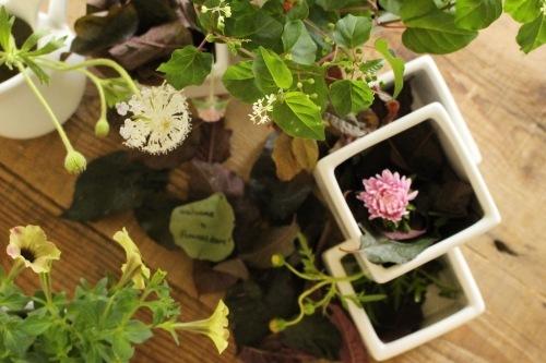 FLOWERS ROOMブログ画像
